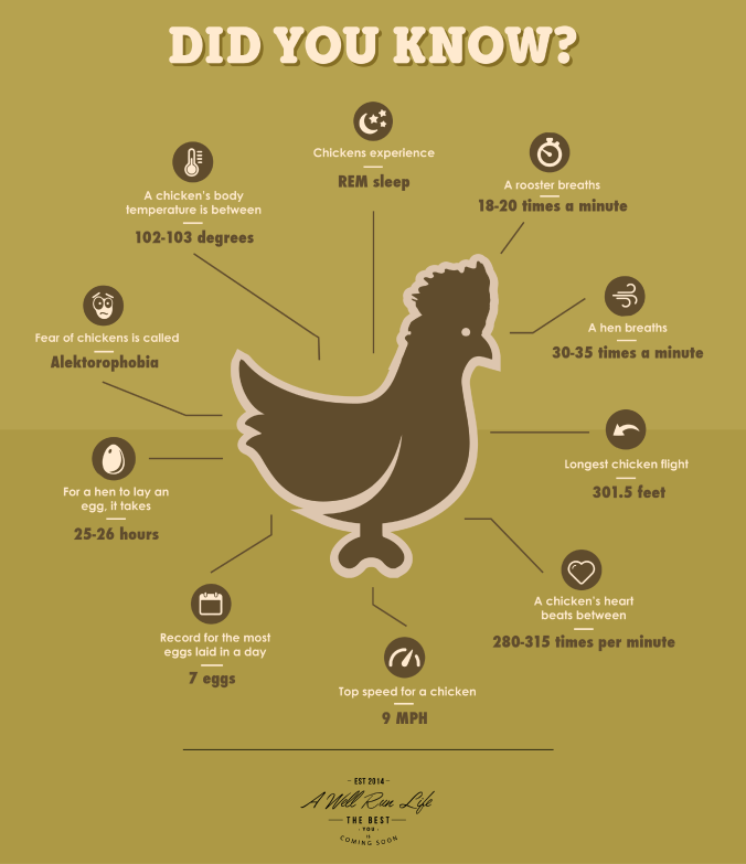 chickeninfographic