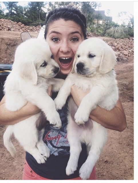 two-puppies-erin
